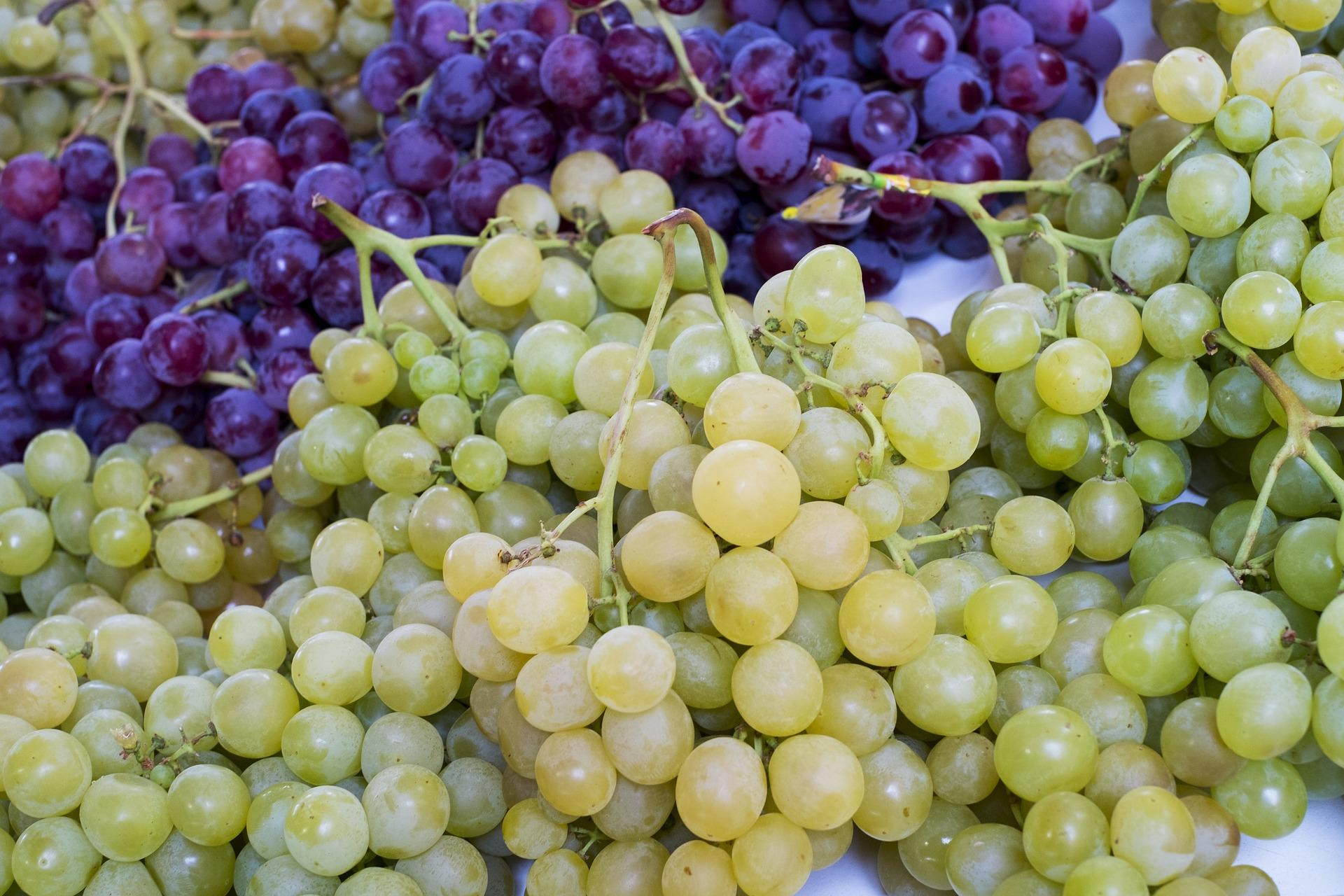 grapes-1143027_1920